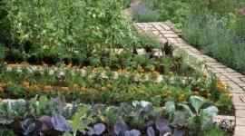 Garten/Gemüse